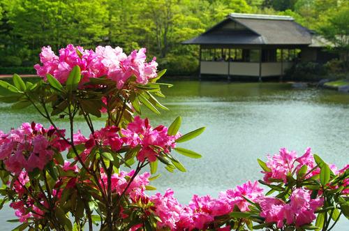 昭和記念公園201304-8