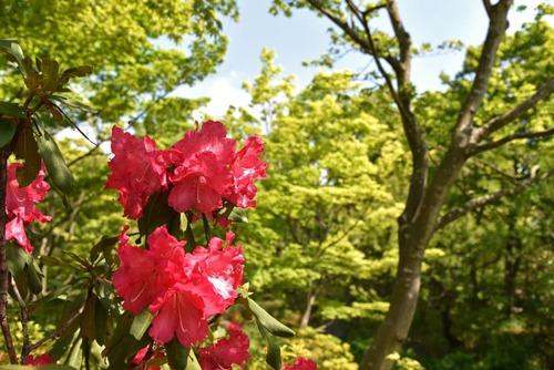 昭和記念公園201505-6
