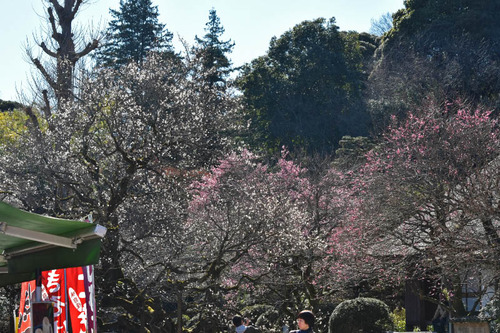 京王百草園201602-4