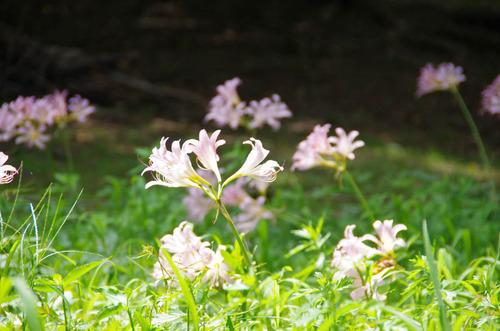 昭和記念公園201108-1