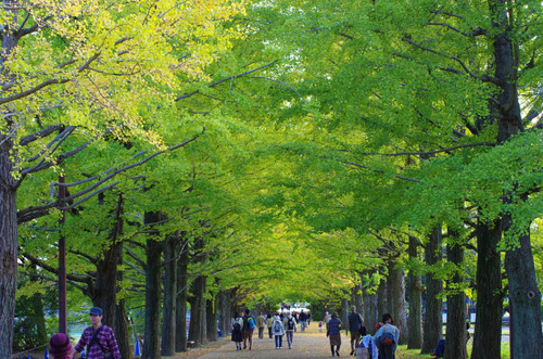 昭和記念公園201411-9