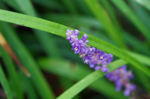 散歩道の花8月2012-5