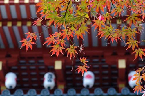 高幡不動尊201011-6