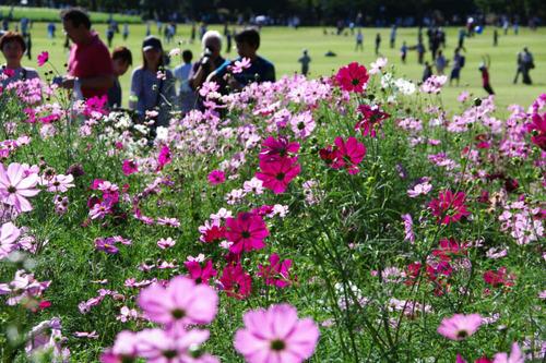 昭和記念公園201010-8