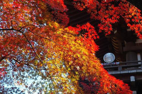 高幡不動201411-5