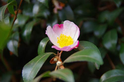 新宿御苑201201-7