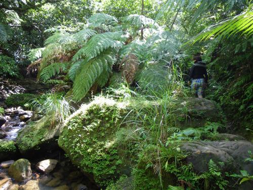西表島ナーラの滝201108-6
