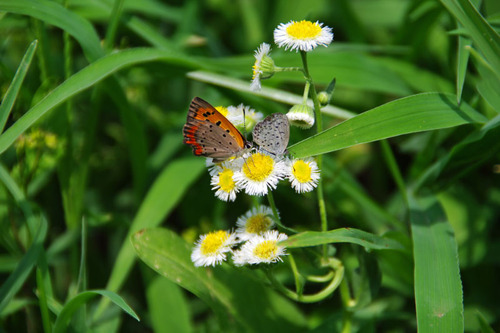 散歩道の虫たち201008-25