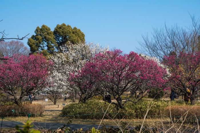 昭和記念公園201802