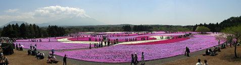 富士芝桜まつりパノラマ