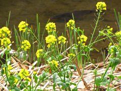 程久保川の春-7