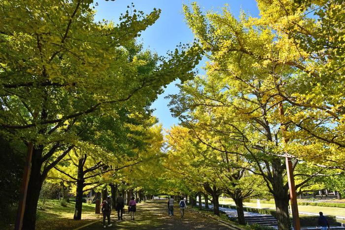 昭和記念公園201710