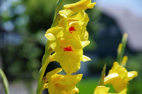 夏の花201107-11