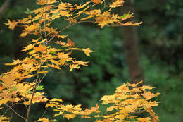 秋の百草園200911-6
