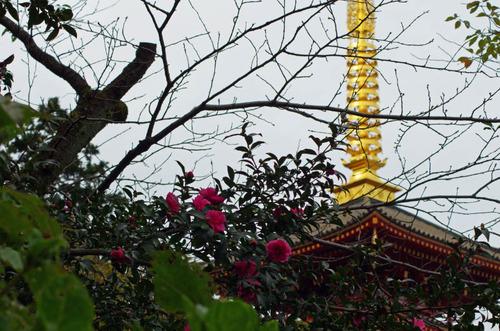 高幡不動201110-11