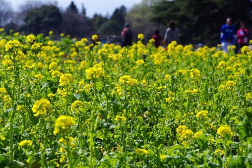 昭和記念公園20100314-20