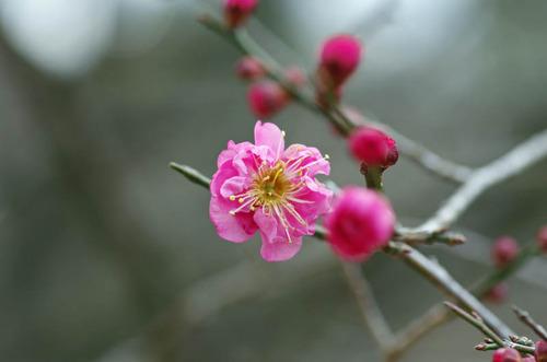 昭和記念公園201401-3えんおう