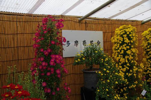 高幡不動尊菊まつり2012-1