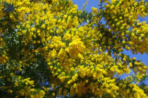 春の明るさ2012-4