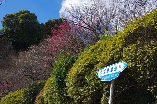 京王百草園201101-13