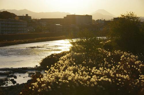 浅川河川敷201112-4