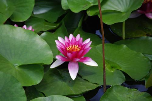 昭和記念公園水辺201006-7