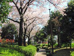 日野中央公園-7