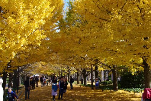 昭和記念公園201011-10