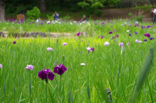 昭和記念公園201306-1