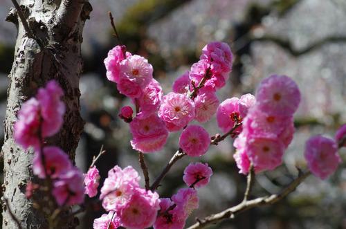 京王百草園201204-5