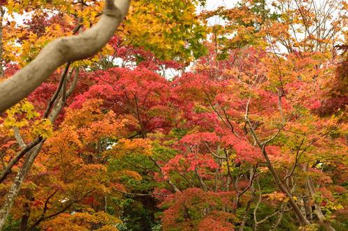 昭和記念公園201511-1