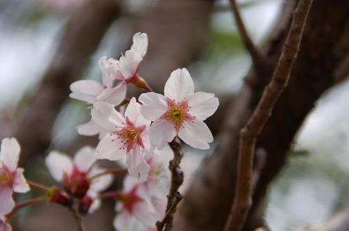 京王百草園201104-2