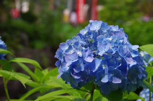高幡不動201206-15