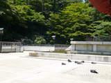 鳩もおつかれ-2