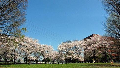 日野中央公園-4