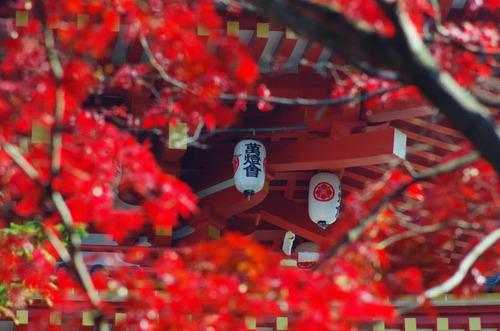 高幡不動201311-8
