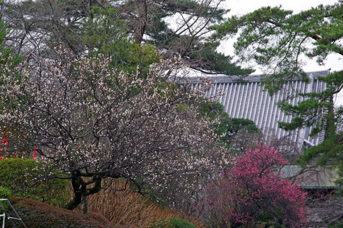 高幡不動尊20100227-9