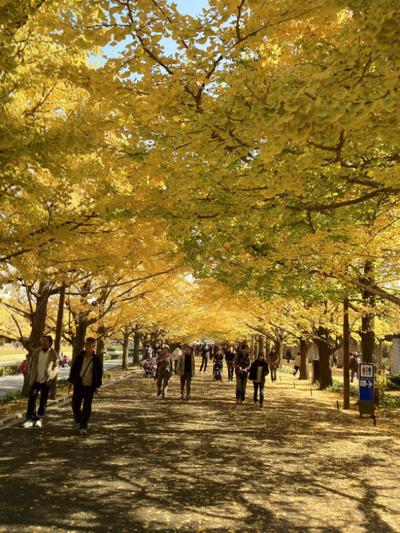 昭和記念公園201111-17