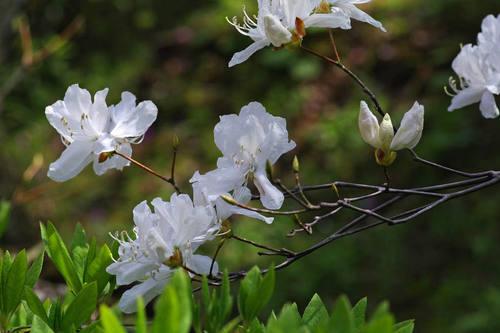 百草園20100418-15
