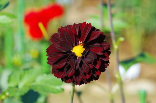 神代植物公園201210-3