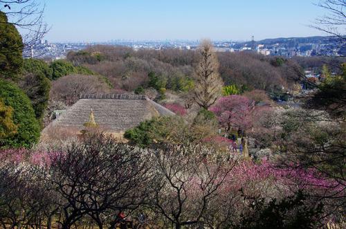 京王百草園201103-4