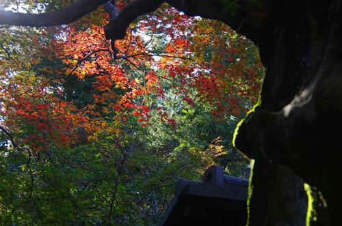 百草園201111-13