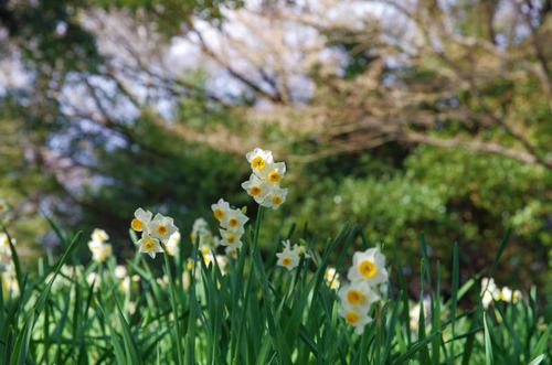 昭和記念公園201401-10
