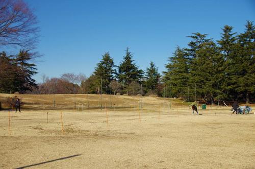 昭和記念公園201312−14