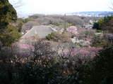 百草園春-1