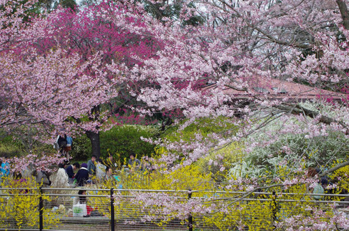 昭和記念公園201204-15
