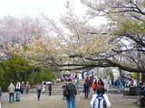 高尾山0420山頂広場