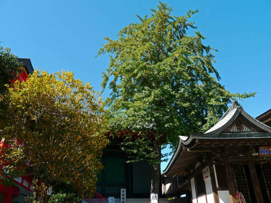 高幡不動尊20091011-4
