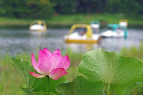 昭和記念公園201407-28