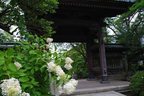 高幡不動尊20100731-5